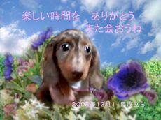 81211トラちゃん